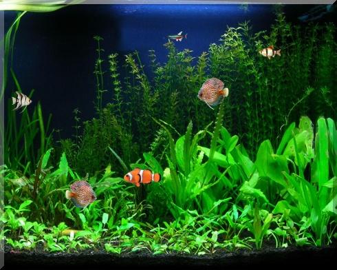 aquarium_s2